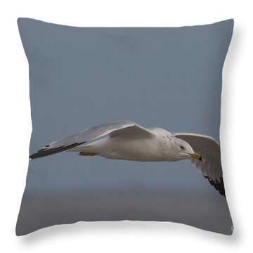 Seagull Glides Over The Beach Throw Pillow by D Wallace