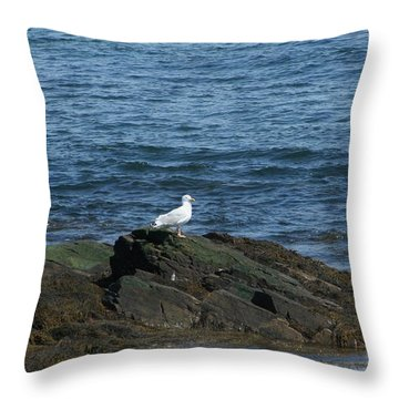 Seagull On The Rocks Throw Pillow