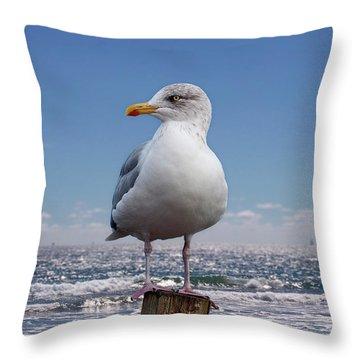 Seagull On The Shoreline Throw Pillow