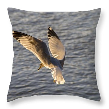 Seagull Over Cape Fear River Throw Pillow