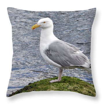 Throw Pillow featuring the photograph Seagull Posing by Glenn Gordon
