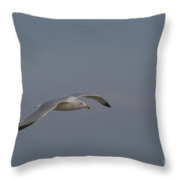 Seagull Spreads Its Wings Throw Pillow by D Wallace
