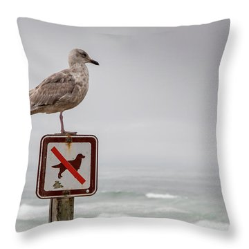 Seagull Standing On Sign And Looking At The Ocean Throw Pillow