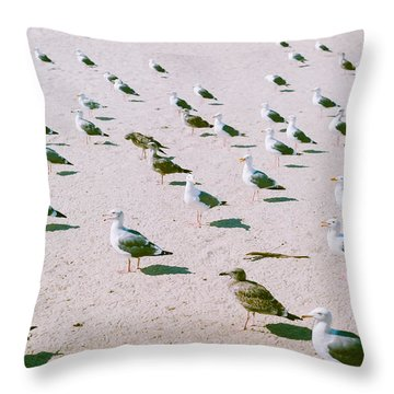 Seagulls  Throw Pillow by Ariane Moshayedi