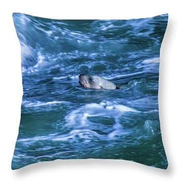 Throw Pillow featuring the photograph Seal In Teh Water by Jonny D