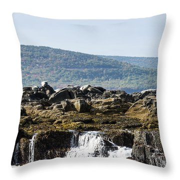 Throw Pillow featuring the photograph Seal Island by Anthony Baatz