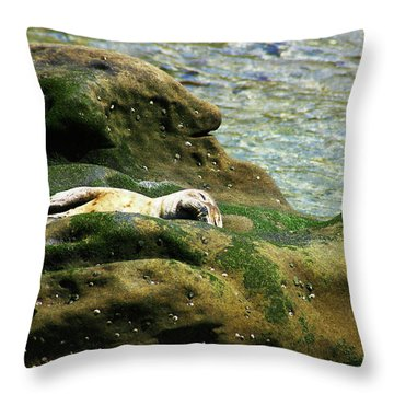 Throw Pillow featuring the photograph Seal On The Rocks by Anthony Jones