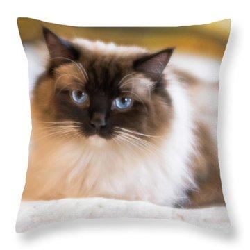Seal Point Bicolor Ragdoll Cat Throw Pillow