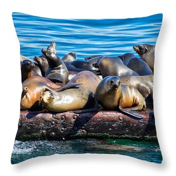 Sealions On A Floating Dock Another View Throw Pillow