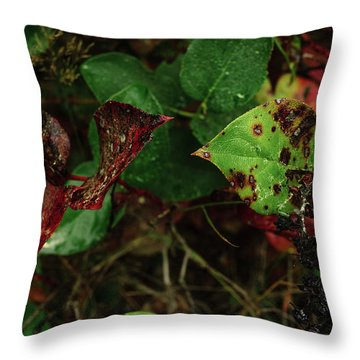 Season Color Throw Pillow