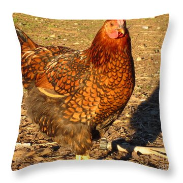 Throw Pillow featuring the photograph Wyandotte Chicken by Laurianna Taylor