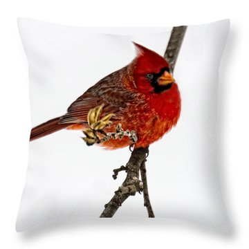 Second Cardinal Throw Pillow