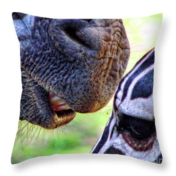 Throw Pillow featuring the photograph Secrets by Traci Cottingham