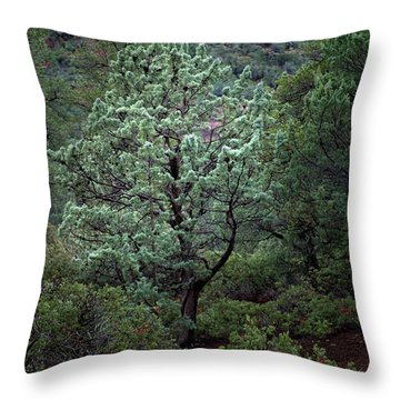 Sedona Tree #1 Throw Pillow
