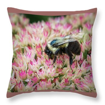 Throw Pillow featuring the photograph Sedum Bumbler by Bill Pevlor