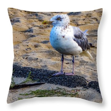 See The Gull Throw Pillow