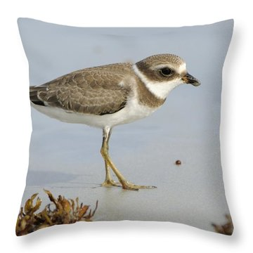 Semipalmated Plover And Sargassum Throw Pillow