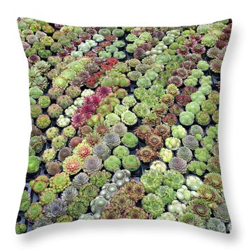 Throw Pillow featuring the photograph Sempervivums by Tim Gainey