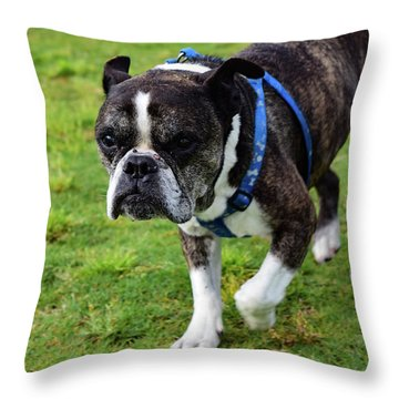 Leroy The Senior Bulldog Throw Pillow