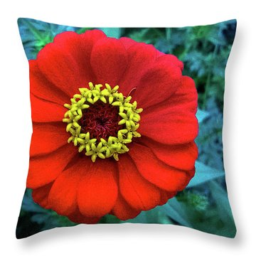 September Red Beauty Throw Pillow