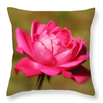 September Rose Up Close Throw Pillow by MTBobbins Photography
