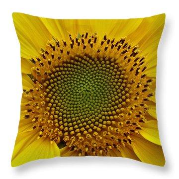 Throw Pillow featuring the photograph September Sunflower by Richard Cummings