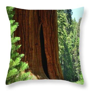Sequoia Giants Trail Of 100 Trees Throw Pillow