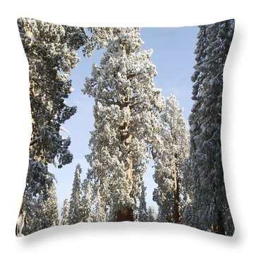 Sequoia National Park 4 Throw Pillow