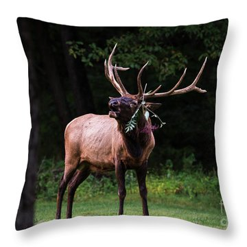Throw Pillow featuring the photograph Serenading by Andrea Silies