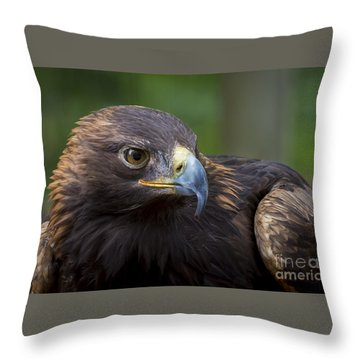 Throw Pillow featuring the photograph Serious by Andrea Silies
