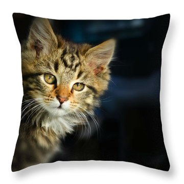 Serious Cat Portrait Throw Pillow