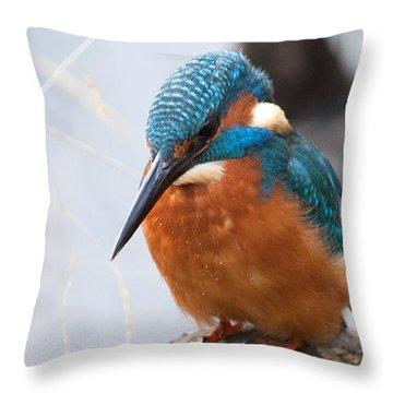 Serious Kingfisher Throw Pillow