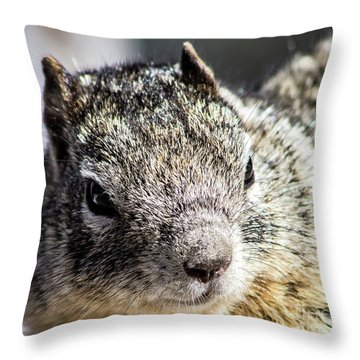 Serious Squirrel Throw Pillow