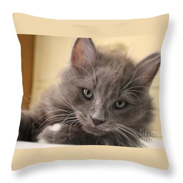Seriously Bro Just Stop With The Photos  Throw Pillow by Scott D Van Osdol