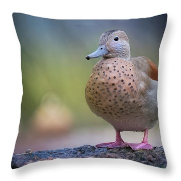 Seriously Cute Throw Pillow