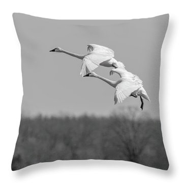 Throw Pillow featuring the photograph Setting Down 20176-1 by Thomas Young