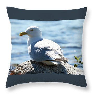 Throw Pillow featuring the photograph Settled In by Sally Sperry