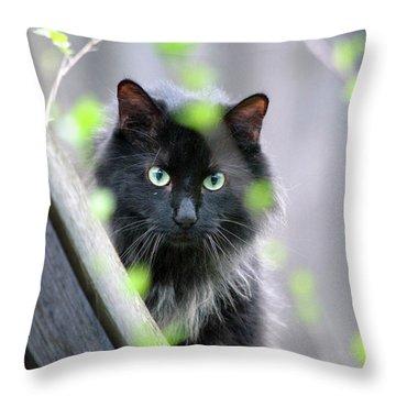 Shadow Predator Throw Pillow