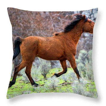 Throw Pillow featuring the photograph Shaggy And Proud by Mike Dawson
