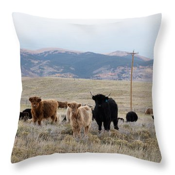 Shaggy-coated Cattle Near Jefferson Throw Pillow by Carol M Highsmith