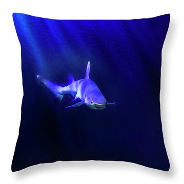 Shark Throw Pillow by Jill Battaglia