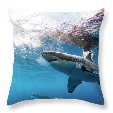 Shark Rays Throw Pillow by Shane Linke