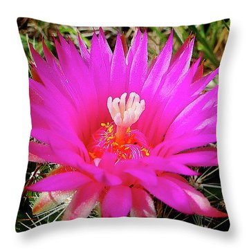 Pincushion Cactus - Coryphantha Vivipara Throw Pillow