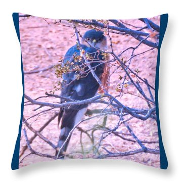 Sharp-shinned Hawk Hunting In The Desert 2 Throw Pillow