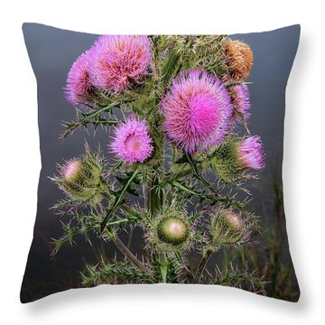 Throw Pillow featuring the photograph Sharp Thistle by Arthur Dodd
