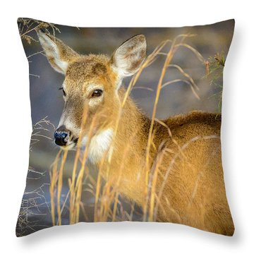 Shed.... Throw Pillow