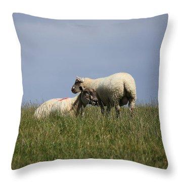 Sheep 4221 Throw Pillow
