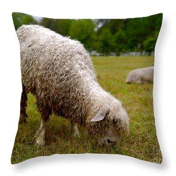 Sheep Begin A New Day Throw Pillow