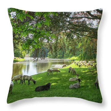 Sheep In A Park  Throw Pillow by Patricia Hofmeester