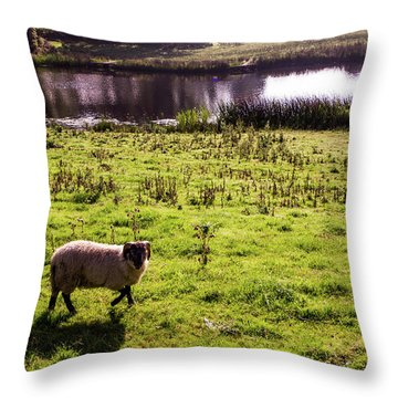 Sheep In Eniskillen Throw Pillow
